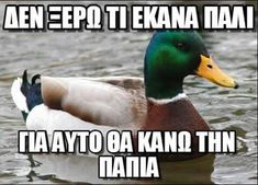 actual advice mallard meme 6 Great nuggets of wisdom from the Actual Advice Mallard Photos) Gold Mine, Funny Stuff, Funny Things, Funny Pics, Funny Humor, Funny Shit, Random Stuff, Funny Images, It's Funny