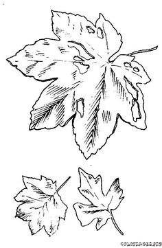 coloring page Leaves on Kids-n-Fun. Coloring pages of Leaves on Kids-n-Fun. More than coloring pages. At Kids-n-Fun you will always find the nicest coloring pages first! Leaf Coloring Page, Cool Coloring Pages, Coloring Pages For Kids, Coloring Books, Colouring, Online Coloring Pages, Printable Coloring Pages, Dame Nature, Nature