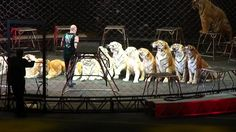 Tigers Don't Belong In The Circus