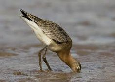 Image result for feeding waders