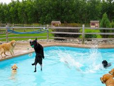 12 pictures from the Lucky Puppy doggy pool party