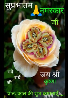 Good Morning Beautiful Flowers, Good Morning Beautiful Quotes, Good Morning Images, Good Morning Quotes, Chankya Quotes Hindi, Laddu Gopal, Morning Post, Morning Greeting, Osho