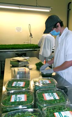 Packaging @ Local Greens