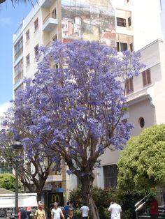 Los Llanos de Aridane (La Palma)