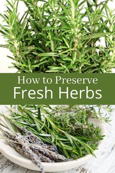 Preserve Fresh Herbs, How To Grow Herbs, Diy Herb Garden, Natural Cough Remedies, Herbs Indoors, Growing Herbs, Medicinal Herbs, Gardening Tips, Gardening Books