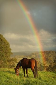 At the end of the rainbow is not a pot of gold, but a horse :)