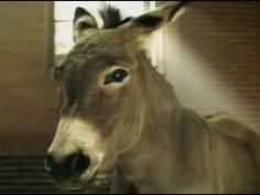 ▶ Super Bowl Superbowl XXXVIII Budweiser Clydesdales Donkey Commercial - YouTube