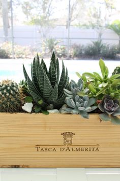 DIY succulent centerpiece in wooden wine box