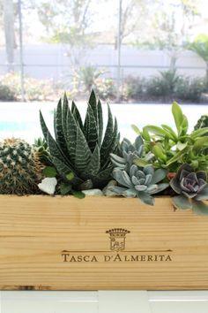 DIY succulent centerpiece in wooden wine box