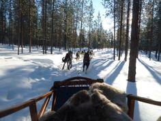 chiens de traîneau, Laponie, Finlande