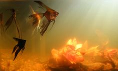 How to Clear Cloudy Water in Your Fish Tank