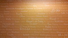 At Petplan, we aim to be the kind of company that will make our pets and those we protect proud... that's why many of their names are written on our walls!