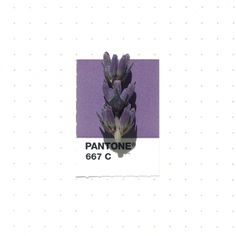 Pantone 667 color match. Lavender flowers. Matching small everyday objects to their Pantone® Matching System colors, by designer Inka Mathew