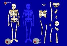 The Skeletal System Online Activities