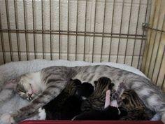 Kaitlyn & five kittens  -- saved!