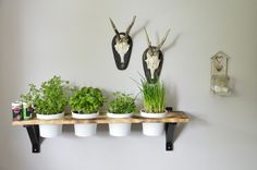 Wandregal für Kräuter, rustikale Küchendekoration / wall rack for herb plants made by Holzkopf via DaWanda.com