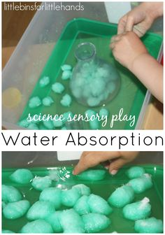 Water Sensory Science Experiment Water sensory science activity with cotton balls for water absorption! Water absorption is one of our classic science experiments. I have been wanting to add sensory science experiments to our play time. On several occasio Thanksgiving Activities For Kindergarten, Thanksgiving Games For Adults, Preschool Science Activities, Spring Activities, Preschool Activities, Water Theme Preschool, Thanksgiving Bingo, Steam Activities, Preschool Curriculum