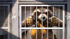 Resultado de imagen para Rocket Raccoon