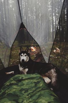Igor Cibulsky | Comfortable tentc