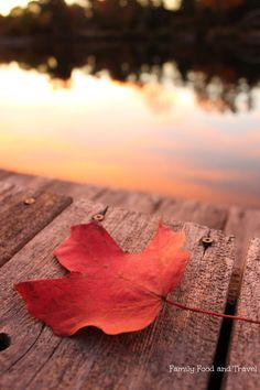 The Beauty of Fall - Family Food And Travel #Fall #photography