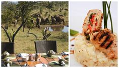 Exceptional private-use villas await families & groups at this super-exclusive safari lodge, set in the malaria-free Madikwe Game Reserve. Game Reserve, Africa Travel, South Africa, Safari, Eat, Food, Gourmet, Kitchens, Meals