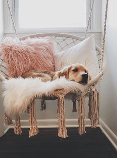 45 coole und moderne DIY Hundebett Ideen 45 coole und moderne DIY Hundebett Ideen Related posts:how I think of kels because she so smol n Stereotypes About Dog People That Are Totally True. Cute Room Ideas, Cute Room Decor, Wall Decor, Dream Rooms, Dream Bedroom, Cute Puppies, Cute Dogs, Cockapoo Puppies, Puppies Tips