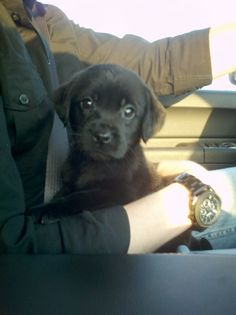 My baby dog!!!!!!
