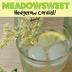 Meadowsweet Cordial | Craft Invaders   Make your own foraged cordial. Beautiful scent and wonderful taste, this is the loveliest of edible flowers!