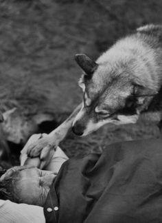 une si grande photo: Steve MC Queen, le loup et l'amitié