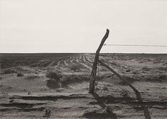 The History Place - Dorothea Lange Photo Gallery: Scenes from the Dustbowl: Furrowing Against the Wind