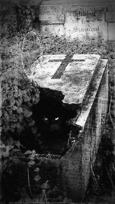Spooktober Special: Cats Hanging Out In Graveyards Cemetery Headstones, Old Cemeteries, Cemetery Art, Graveyards, Arte Obscura, Dark Photography, Dark Art, Dark Side, Scary