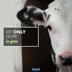 Go vegan today and become a voice for the vulnerable and voiceless.