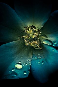 this is beauty how the raindrops on the flower and how it brightens it all up.