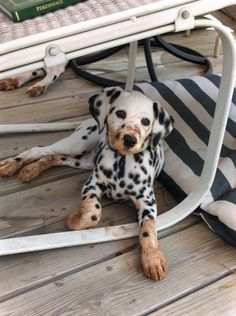 a little dirty? Ha! Reminds me of Jack and why I called him my orange and black dalmation (after a day digging in the Alabama red clay).