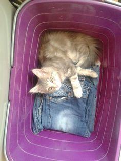 Mmmm die spijkerbroek is lekker warm.
