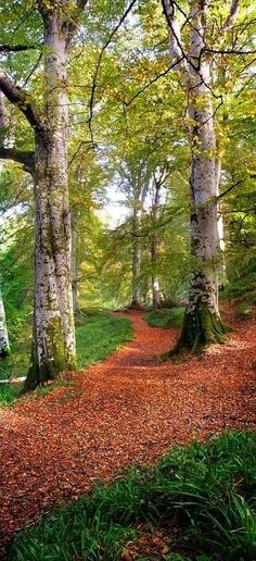 Cawdor Big Wood near Cawdor Castle in Nairnshire, Scotland • photo: Joe Macrae on FineArtAmerica