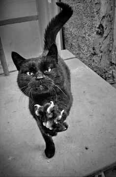Imagem de black cat