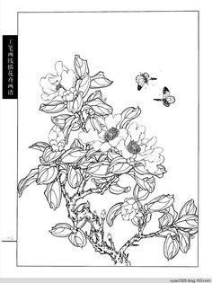 工笔画白描---茶花 - 水韵清香 - 水韵清香