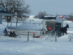 Horse-and-Buggy Pulling Amish Sledders