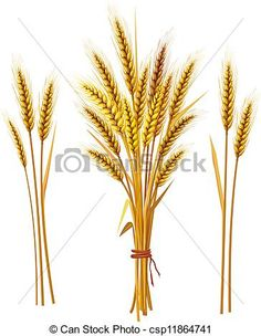 Vector - Spike of wheat - stock illustration, royalty free illustrations, stock clip art icon, stock clipart icons, logo, line art, EPS picture, pictures, graphic, graphics, drawing, drawings, vector image, artwork, EPS vector art