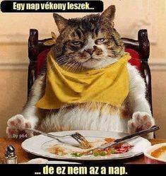 Humoros képek Cat Lovers, Rap, Funny, Animals, Music, Dinner, Animales, Musica, Dining