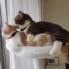 Like Other kittens, Duo loves to play, Chow down and quickly around the house. Unlike most kittens, Duo happens to … Cute Funny Animals, Cute Baby Animals, Animals And Pets, Funny Cats, Cute Cats And Kittens, Kittens Cutest, Beautiful Cats, Animals Beautiful, Gato Gif