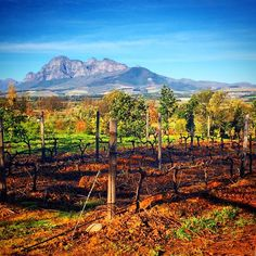 """""""Surely one of my best birthdays was spent wine tasting in Cape Town at several vineyards starting with this view at Fairview Wine and Cheese!  #southafrica #capetown #africa #winesocialclub #wine #spirits #vino #grapes #wineandspirits #winelovers #winesofinstagram #winespectator #redwine #instawine #wineporn #wineaddiction #wineaddicts #cellar #vineyard #winetasting #lifeisgood #travel #timeforwine #lovewine #winelove #winetype #luxe #luxury #travelblogger #tinto"""" Photo taken by…"""