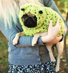 Pug lamb    Like, repin, share! :)