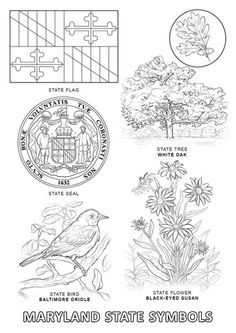maryland state symbols coloring page - Geography Coloring Book