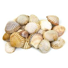 Sea Shells ❤ liked on Polyvore featuring fillers, backgrounds, beach, shells and decoration