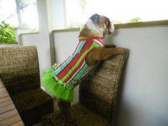 curious princess Bulldog Puppies, Blanket, Princess, Blankets, Cover, Comforters, Baby Bulldogs, Princesses