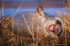 The Affinity Photo People's Choice Award :: Comedy Wildlife Photography Awards - Conservation through Competition Comedy Wildlife Photography, Photography Contests, Photography Awards, Animal Photography, Wild Life, Funny Animal Photos, Funny Photos, Funny Animals, Funniest Photos
