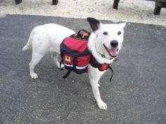 61znVL4dzgL. SX342  Dog Evacuation Bug Out Bag Pack List & Training Tips To Use It