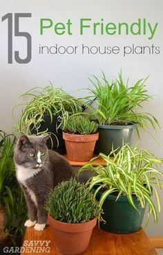 Plants and pets don't always get along, but some indoor plants can be downright dangerous. Improve your house wellness with plants safe for your pets!
